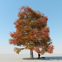 max realistic maple tree autumn