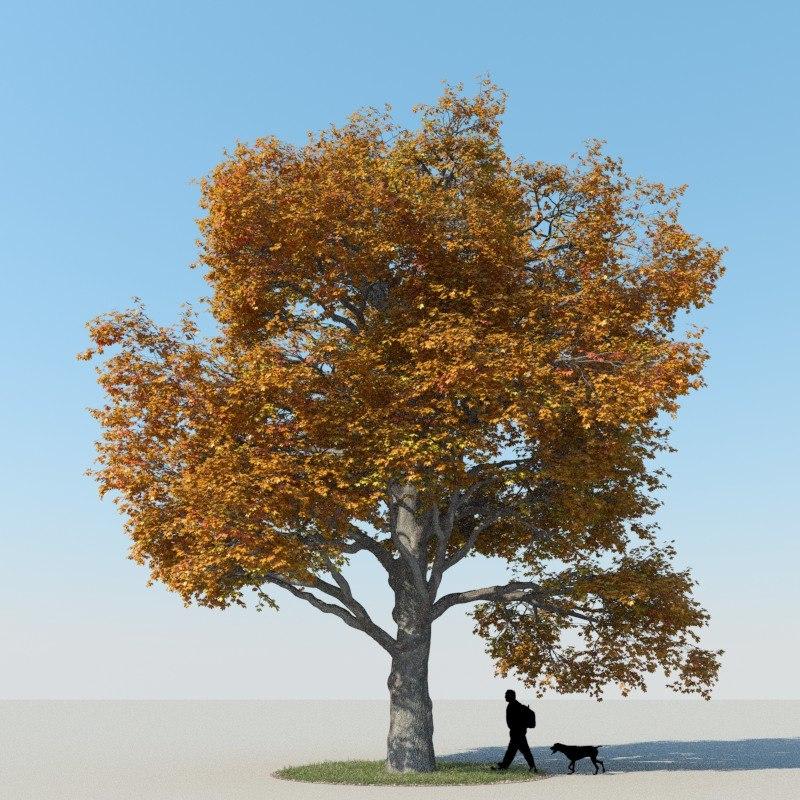 3dsmax realistic maple tree autumn