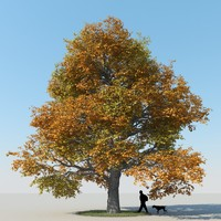 obj realistic maple tree autumn