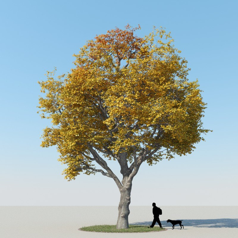 3ds max realistic maple tree autumn