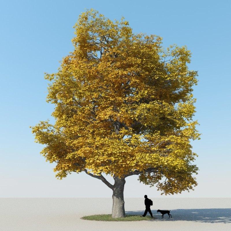 3ds max realistic maple tree autumn