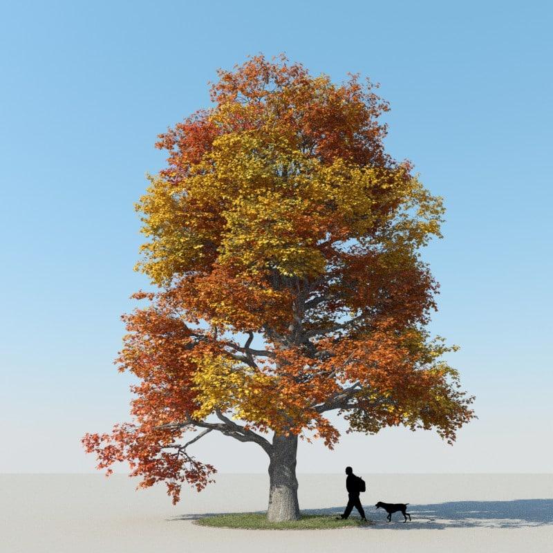 x realistic maple tree autumn