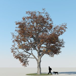 realistic maple tree autumn max