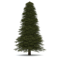 3d realistic fir tree 2