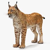 max lynx eurasian