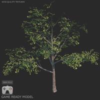 tree 3d fbx