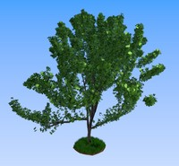 maya tree summer