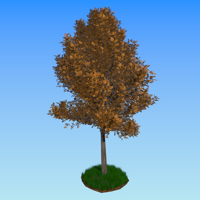 3d tree summer autumn