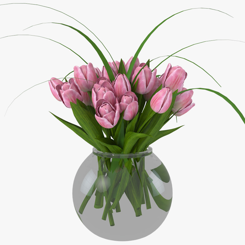 max tulips flowers plant