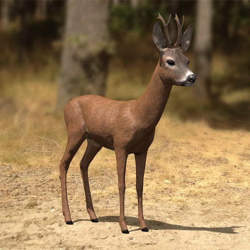 roe-deer-buck antlers c4d
