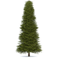 3ds max realistic fir tree 4