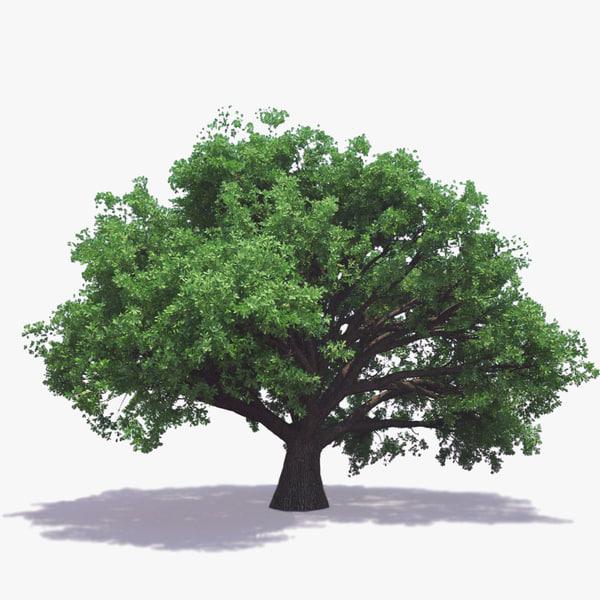 3ds max english oak tree