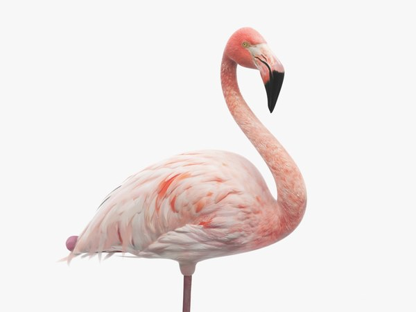 3d model flamingo pink white