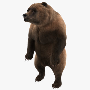 3d model of grizzly bear pose 3