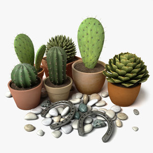 c4d cactus vrayfor planter
