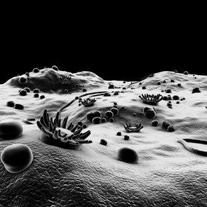 3d microscopic environment bacteria model