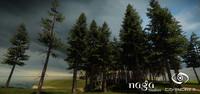 Spruce Tree Set