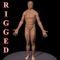 3d model human male body