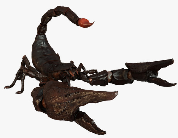 3d model scorpion arachnid