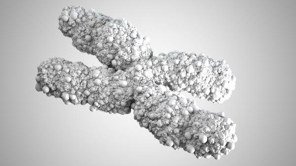 3d model chromosome chromo
