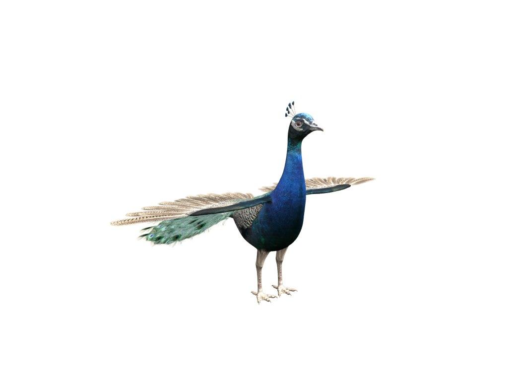 3d ma peacock