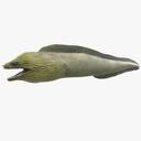 Eel 3D models