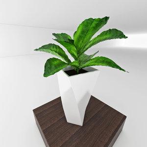 vase plant 3d model