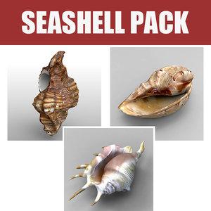 seashell sea shell 3ds