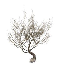 3d model random desert dry tree bush