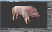 3d pig games model