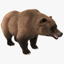 Grizzly Bear 3D models