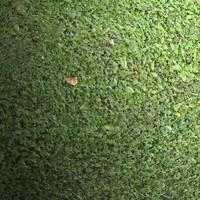 Grass #01 Texture