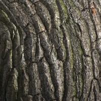 Wood bark #02 Texture
