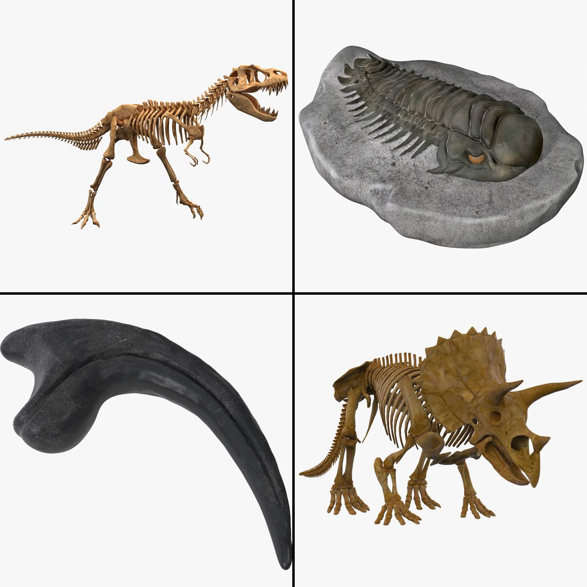 fossil triceratops skeleton 3d model