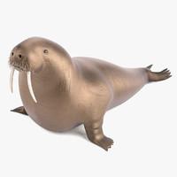 3d model walrus odobenus rosmarus