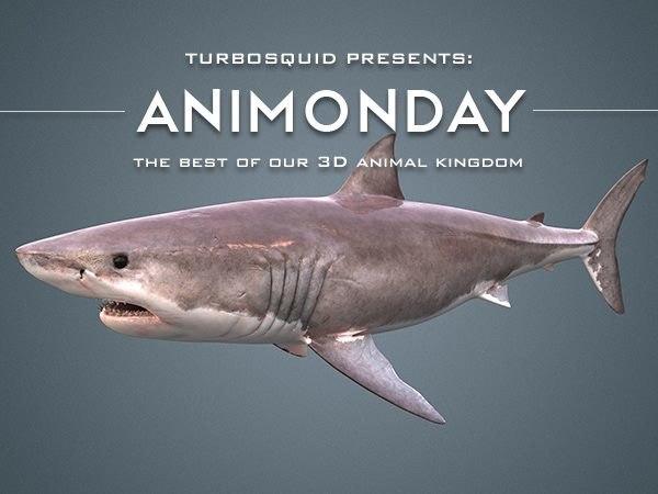3d model white shark