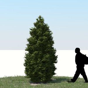 realistic thuja tree 3d model