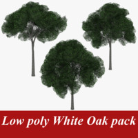 3d model pack white oak tree