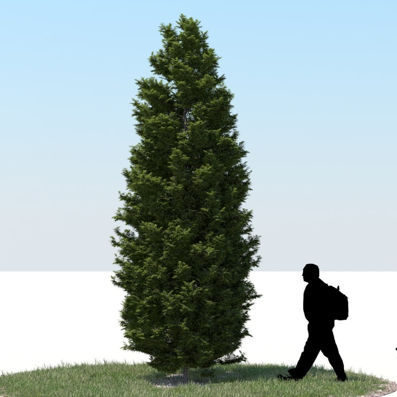 3ds max realistic thuja tree