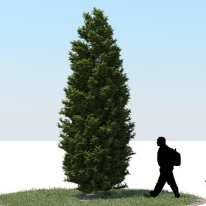 3ds max realistic thuja tree