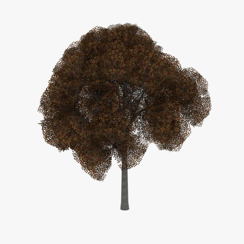 3d model white oak tree