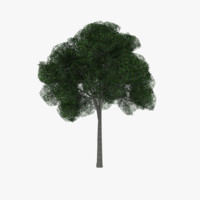 Low poly white Oak tree two