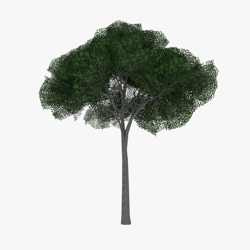 3ds max white oak tree