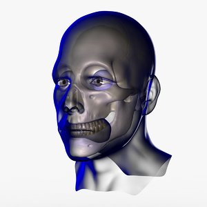 3d x-ray male face