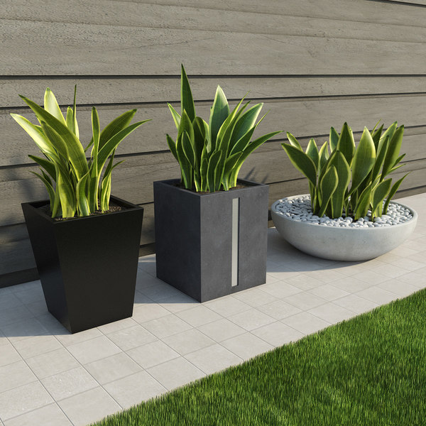3d max indoor outdoor plants