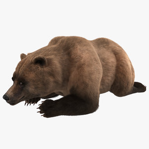 3d grizzly bear pose 5