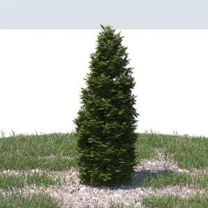 realistic thuja tree ma
