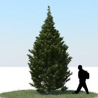 realistic thuja tree 3d max