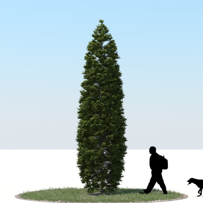 3d realistic thuja tree model