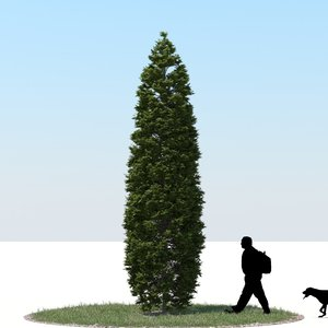 3d realistic thuja tree model